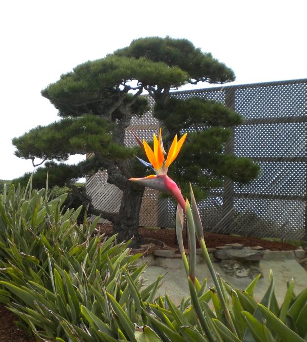 """Ming Tree"""
